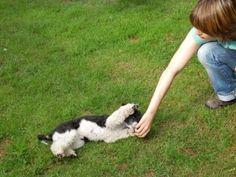 Hundetrick: Rolle