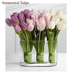 Tulips :*