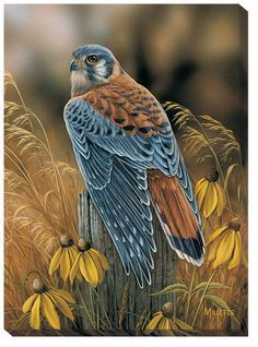 "Fencepost Perch – Kestrel Wrapped Canvas Print BY ROSEMARY MILLETTE ""This portrait of a male kestrel shows off his beautiful colors of slate and rust in a setting of gold."" Offering the character and Pretty Birds, Beautiful Birds, Animals Beautiful, Wildlife Paintings, Wildlife Art, All Birds, Birds Of Prey, Angry Birds, Exotic Birds"