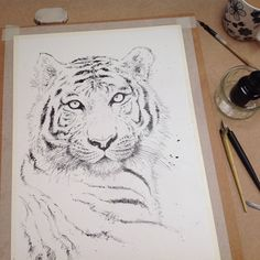 Tiger pen and ink drawing...work in progress!