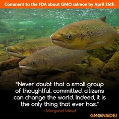 The FDA has issued a draft environmental assessment which is open for public comment until April 26, 2013. Add your voice and sign here! http://action.greenamerica.org/p/dia/action/public/?action_KEY=10106