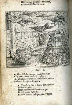 The chicken and her chicks 1567
