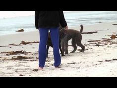 Dog Friendly Vacations Are Easy and Fun - Vacation Pet Friendly