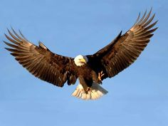 Splendor in Flight~Eagles