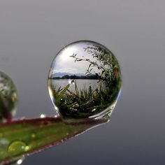 World inside a water droplet.