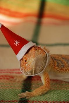 Did you say you're buying me a #CritterZone for Christmas?! It's Lizard-Claus! #HolidayPets