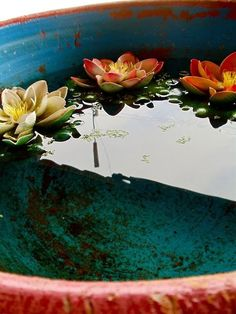 blue orange bucket with floating lotus