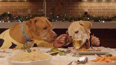 [VIDEO]: 13 Dogs and a Cat Share a Holiday Meal in this Ridiculous Commercial |  Woofipedia.com | Celebrates all dogs, and the people who love them. Our aim is to engage, entertain, and educate.