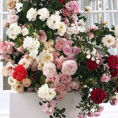 DREAM FLOWERS #largefloralarrangement #flowerdisplay #flowerinspirtion #roses Online Fashion Boutique, Floral Wreath, Roses, Bloom, Clothes For Women, Flowers, Shopping, Style, Outerwear Women
