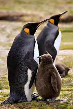 h4ilstorm: Family (by Clickr Bee / Flickr)
