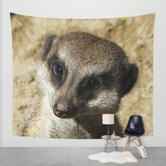 Buy MM - Meerkat portrait Wall Tapestry by Pirmin Nohr. Worldwide shipping available at Society6.com. Just one of millions of high quality products available. A sweet looking meerkat nature, animal, face, fauna, suricate, portrait
