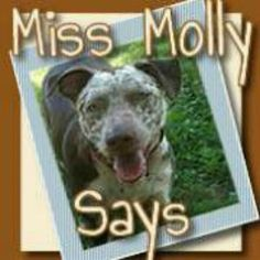 Families & Pets Archives - Miss Molly Says