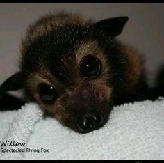 Baby bat. Aww...