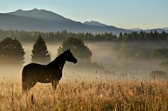 Horse in Misty Valley (via equinefeather) Horse Love, Dark Horse, Pretty Horses, Animal Photography, Nature Photography, Most Beautiful Animals, Animals Of The World, Wild Horses, That Way