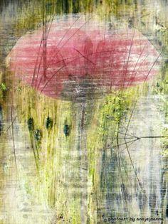 Poppy in a field by ansjejoanna mixed media