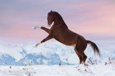 The best - KWPN gelding Aragon at sunrise in Tatra mountains