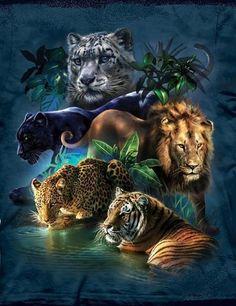 ●‿✿⁀ Tigers ‿✿⁀●