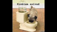 ⚡️Pug is thirsty for Toilet Water, Problem Solved ⚡️   ⚡️Get Tons of Free Traffic and Followers On Autopilot with Your Instagram Account⚡️ http://instautomator.com    Follow my Friends Below Follow ➡️@Health.fitness.motivation_           ➡️@Health.fitness.motivation_ Follow ➡️ @must.love.animals             ➡️ @must.love.animals      Follow   ➡️@inspiration.and.quotes               ➡️@inspiration.and.quotes   #lol #wealth #cash #profit #follow #girl #quotes #cashout $5.55