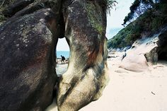 Bill✔️   The almost ape-like limbs of the Tonga Arches are a wonder of Abel Tasman National park.     Bill Gibson-Patmore.  (curation & caption: @BillGP). Bill✔️