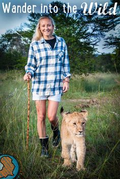 Wander into the wild with our lion rehabilitation projects, which work alongside ALERT to preserve Africa's lion population.   http://www.africanimpact.com/conservation-volunteering/lion-rehabilitation