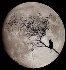 la misteriosa tranquillità della notte