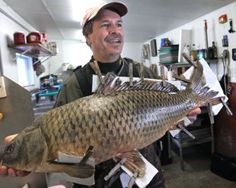Photos: A river rat that knows his carp and more : Wsj