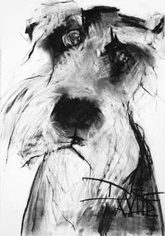 drawing by Valerie Davide Schnauzer. we rescued a mini schnauzer off the side of a deserted highway, and fell in love. The humblest, gentlest soul that ever existed on earth. Schnauzers love to eat.so now we have a chubby little ball of love. Animal Paintings, Animal Drawings, Art Drawings, Drawing Sketches, Charcoal Art, Charcoal Drawing, Schnauzer Art, Art Graphique, Drawing Techniques