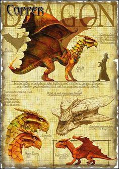 Dragon cuivre                                                                                                                                                     Plus