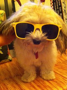 """This cool dude kept it casual all day today.   38 Pets Who Celebrated """"Dress Your Pet Up Day"""" In Style"""