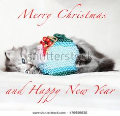Sweet puppy cat for Merry Christmas ,playing with a ball - Check out this New image on @shutterstock #natale #christmas #Noël #gattini #puppies #chiots #chats #cats #聖誕節 #クリスマス