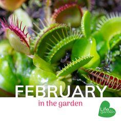 Dissecting carnivorous plants, likable lizards, V-day roses and more. Carnivorous Plants, Lizards, Roses, Gardening, Day, Life, Pink, Rose, Garten