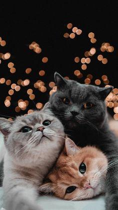 Cute Baby Cats, Cute Little Animals, Cute Cats And Kittens, Cute Funny Animals, Kittens Cutest, Wallpaper Gatos, Cute Cat Wallpaper, Animal Wallpaper, Plain Wallpaper