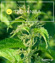 Herbs, Health, Plants, Salud, Health Care, Herb, Flora, Plant, Healthy