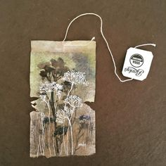 'Queen Anne's Lace' ... 363 days of  Tea, day 341,  Journey of a Tea Bag
