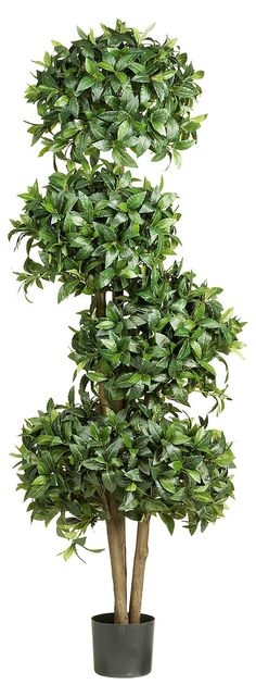 One Kings Lane - Lasting Summer - 5.5' Sweet Bay Topiary Tree