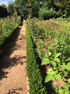 Shepard did an amazing trim to the 1000s of Buxus surrounding the rose beds of this Parkview garden. It has instantly made all look so smart.