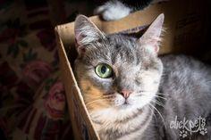 Essa gatinha linda é do Beco da Esperança e está para adoção em Curitiba. Nós fizemos um post com muito carinho no nosso blog para contar pra você como pode adotar um gatinho do Beco! Confira aqui no link: http://fotografiadeanimais.com.br/adote-caes-e-gatos-do-beco-da-esperanca/  Click Pets - Fotografia de Animais   #ClickPets #FotografiadeAnimais #fotografiapet #Catlovers #Cats #Cat #Pet #Brasil #Curitiba #AdoteEmCuritiba #AdoteUmGatinho #GatosSãoLindos