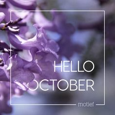 October brings with it the hustle and bustle of the year-end rush. But it also brings sunny weather, seasonal fruit and veggies, braais, rainy afternoons, swimming and festivals. As the Jacarandas bloom and make our beautiful city flush with purple – wherever you are in South Africa, we hope you have a wonderful October! Hello October, Sunny Weather, Fruit In Season, Visual Communication, Months In A Year, Falling In Love, Messages, Seasons, Day