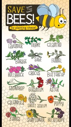 "cunningcelt: "" Some magical associations for the flowers of @eartheasy's ""Save the Bees by Planting These"" post: Lavender - love, attraction, healing, protection. Thyme - awareness, purification,..."