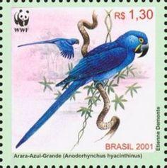 Hyazinth Macaw (Anodorhynchus hyacinthinus)