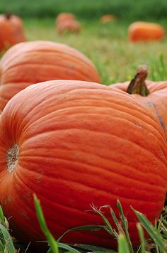 Pumpkin everything is great! Seasons Of The Year, Four Seasons, It's The Great Pumpkin, Pumpkin Farm, Happy Fall Y'all, Autumn Day, Fall Pumpkins, Fall Halloween, Fall Decor