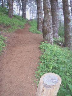 Saddle Mountain Hike - Hiking in Portland, Oregon and Washington Portland Hikes, Portland Oregon, Mountain Hiking, Washington, Backyard, Outdoor Decor, Fun, Fin Fun, Yard