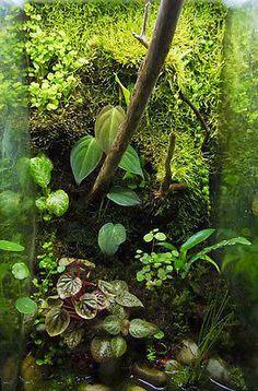 Living Background Terrarium Clay Vivarium Poison Dart Frog Reptile Insect Mantis | eBay