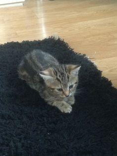Wee Alfie, my brothers kitten :)