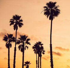 Картинка с тегом «nature, outside, and palms»