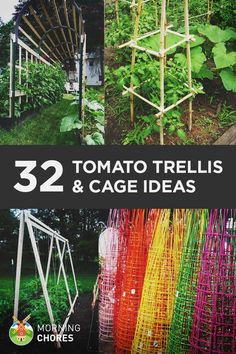 Growing Tomatoes Tomato Trellis and Cage Ideas - You can't grow healthy tomato without a tomato trellis or cages. Read this if you need plans and ideas to build a DIY trellis/cages in your garden. Tomato Trellis, Diy Trellis, Tomato Cages, Garden Trellis, Trellis Ideas, Tomato Planter, Tomato Tomato, Tomato Cage Diy, Cucumber Trellis