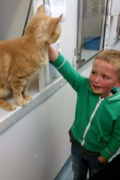 Mans Best Friend Cat For Years Cuties With Cuties - 13 year old shelter cat finally got adopted and now only falls asleep if his human holds his paw