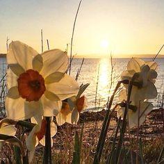 #günaydın #goodmorning by ozanozlem
