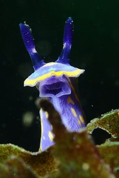Beautiful Sea Creatures, Sea Slug, Underwater Creatures, Underwater Photos, Sea Fish, Under The Sea, All Art, Cute Animals, Strange Animals