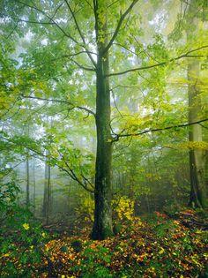 (via 500px / Autumn Tree by Kilian Schönberger)
